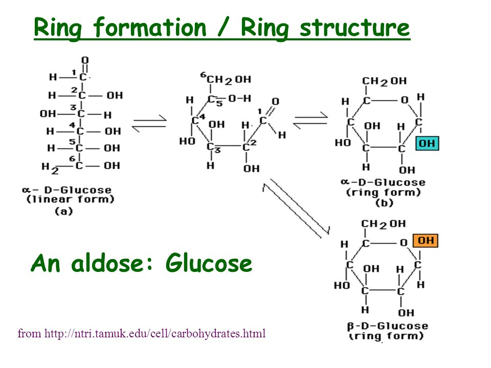 Ring formation / Ring structure from http://ntri.tamuk.edu/cell/carbohydrates.html An aldose: Glucose