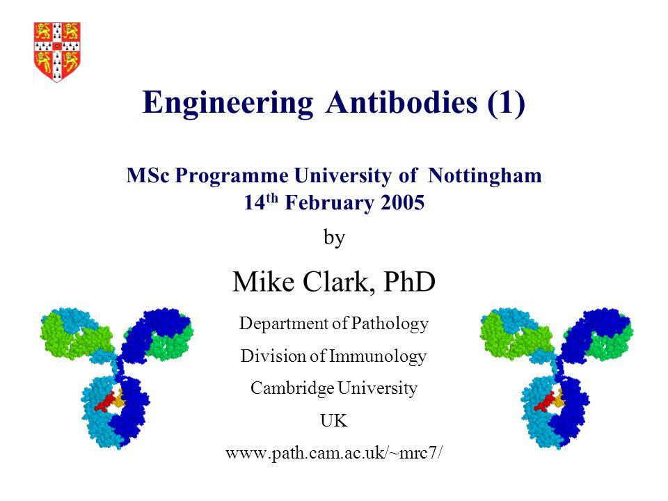 Antibody based immunotherapeutics