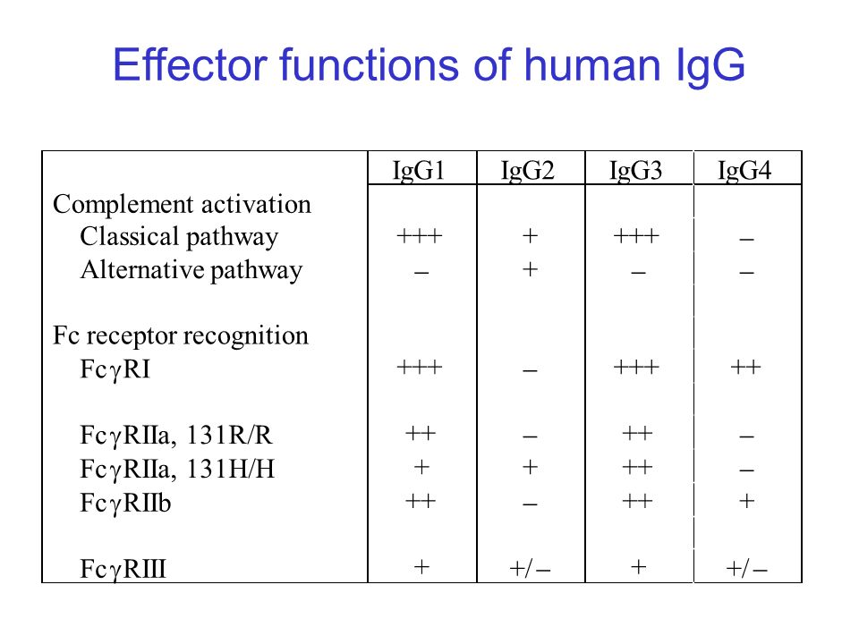 Effector functions of human IgG IgG1IgG2IgG3IgG4 Complement activation Classical pathway++++ Alternative pathway + Fc receptor recognition Fc RI +++ +
