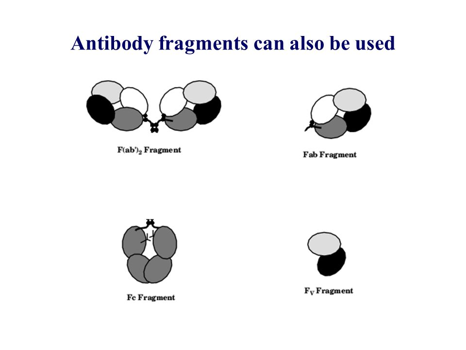 Antibody fragments can also be used