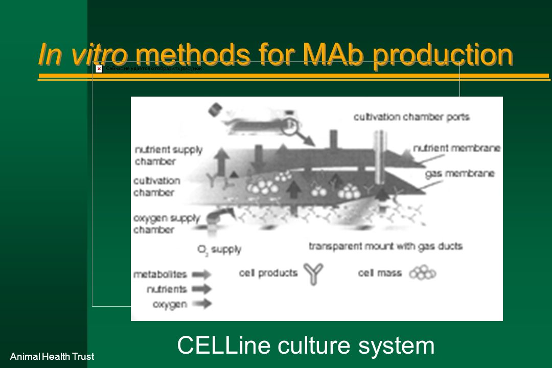 Animal Health Trust In vitro methods for MAb production CELLine culture system