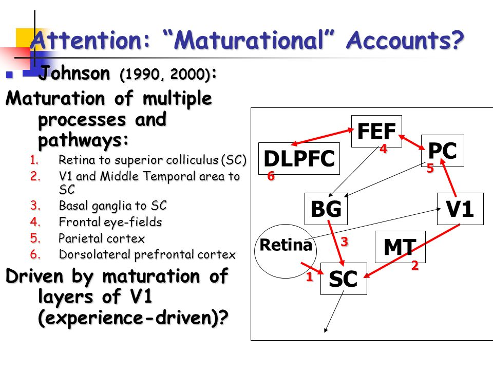 Johnson (1990, 2000) : Johnson (1990, 2000) : Maturation of multiple processes and pathways: 1.Retina to superior colliculus (SC) 2.V1 and Middle Temporal area to SC 3.Basal ganglia to SC 4.Frontal eye-fields 5.Parietal cortex 6.Dorsolateral prefrontal cortex Driven by maturation of layers of V1 (experience-driven).