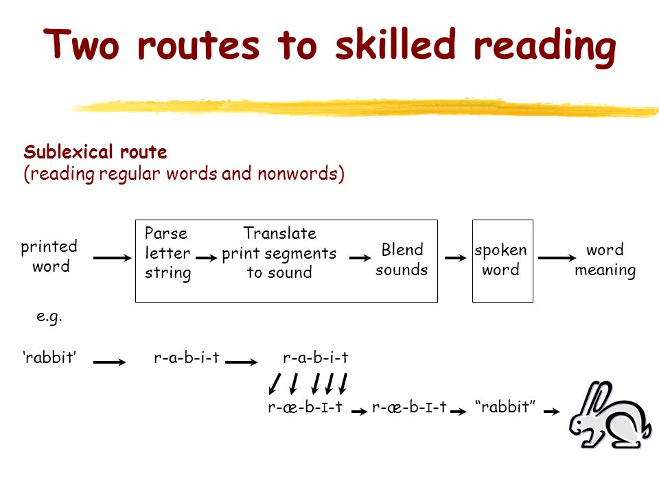 Two routes to skilled reading Sublexical route (reading regular words and nonwords) printed word spoken word word meaning Parse letter string Translat