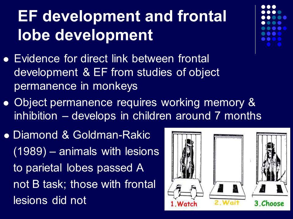 EF development and frontal lobe development Evidence for direct link between frontal development & EF from studies of object permanence in monkeys Obj