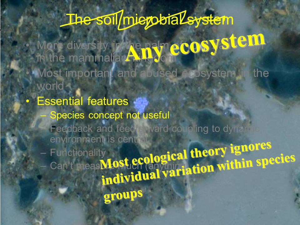 The soil microbial system More diversity in the palm of your hand than in the mammalian kingdom Most important and abused ecosystem in the world Essential features –Species concept not useful –Feedback and feedforward coupling to dynamic environment is central –Functionality –Cant measure much (anything) Most ecological theory ignores individual variation within species groups Any ecosystem