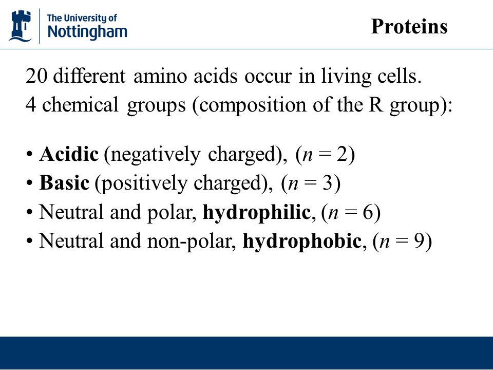 20 different amino acids occur in living cells. 4 chemical groups (composition of the R group): Acidic (negatively charged), (n = 2) Basic (positively