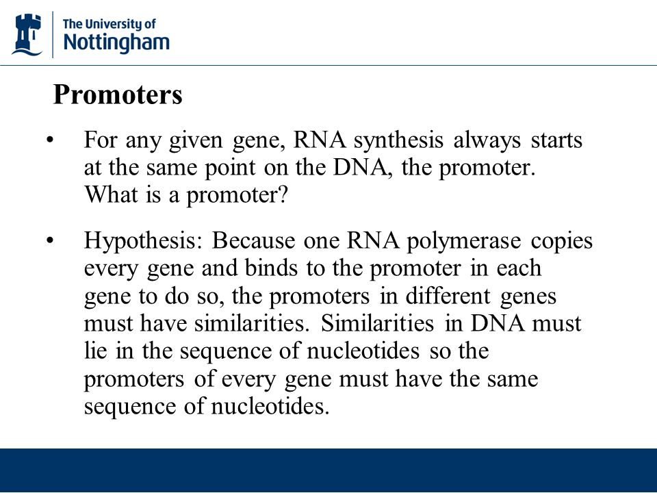 For any given gene, RNA synthesis always starts at the same point on the DNA, the promoter. What is a promoter? Hypothesis: Because one RNA polymerase
