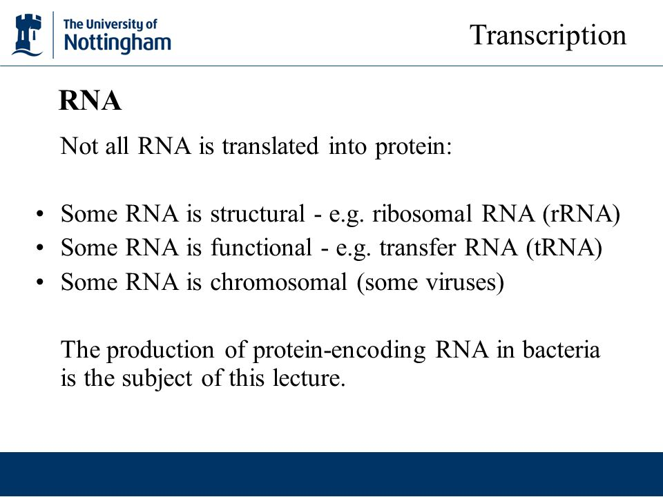 Not all RNA is translated into protein: Some RNA is structural - e.g. ribosomal RNA (rRNA) Some RNA is functional - e.g. transfer RNA (tRNA) Some RNA