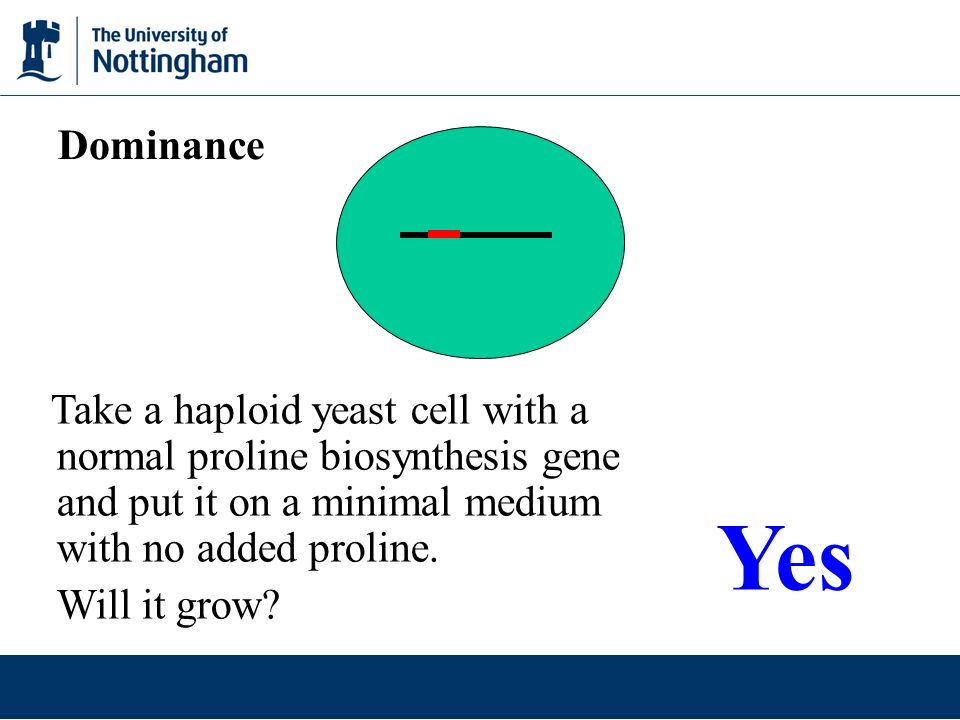 Dominance Take a haploid yeast cell with a normal proline biosynthesis gene and put it on a minimal medium with no added proline.