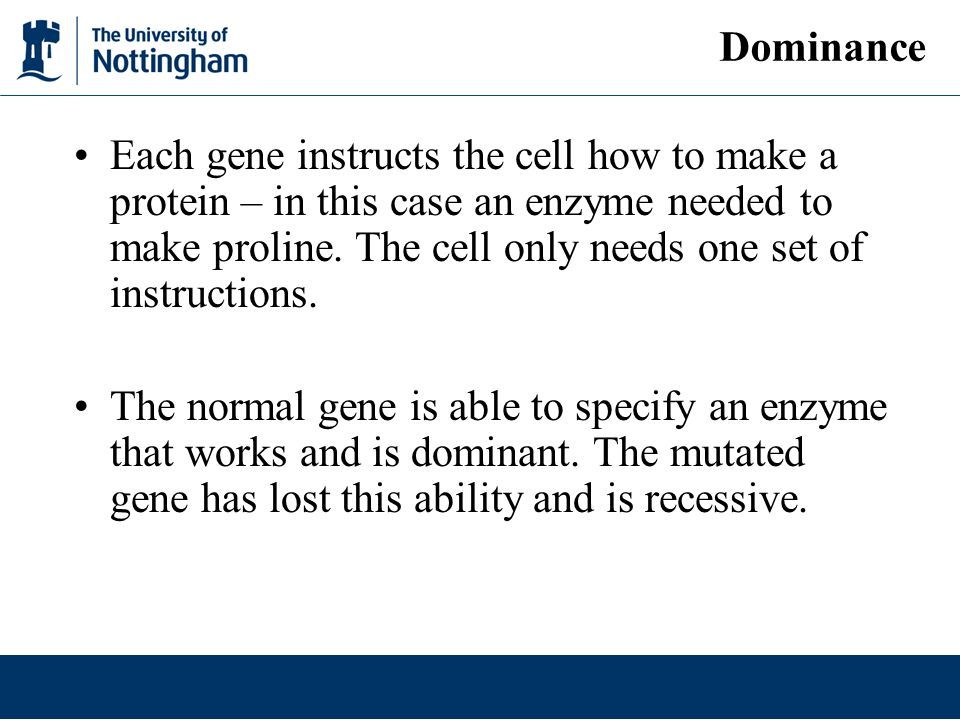 Each gene instructs the cell how to make a protein – in this case an enzyme needed to make proline.
