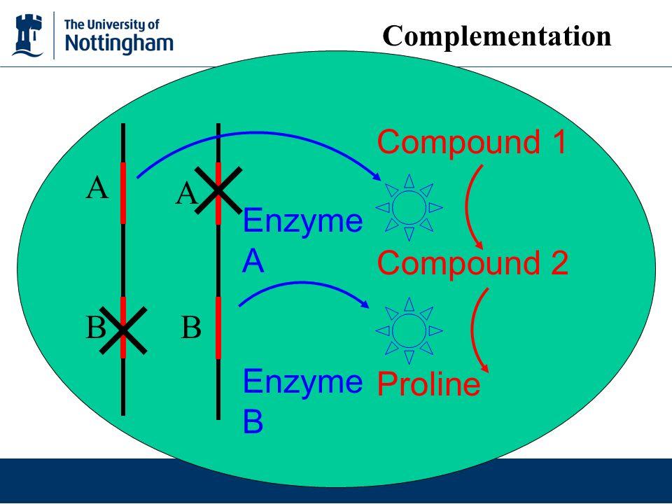 Compound 1 Compound 2 Proline Enzyme A Enzyme B A B A B Complementation