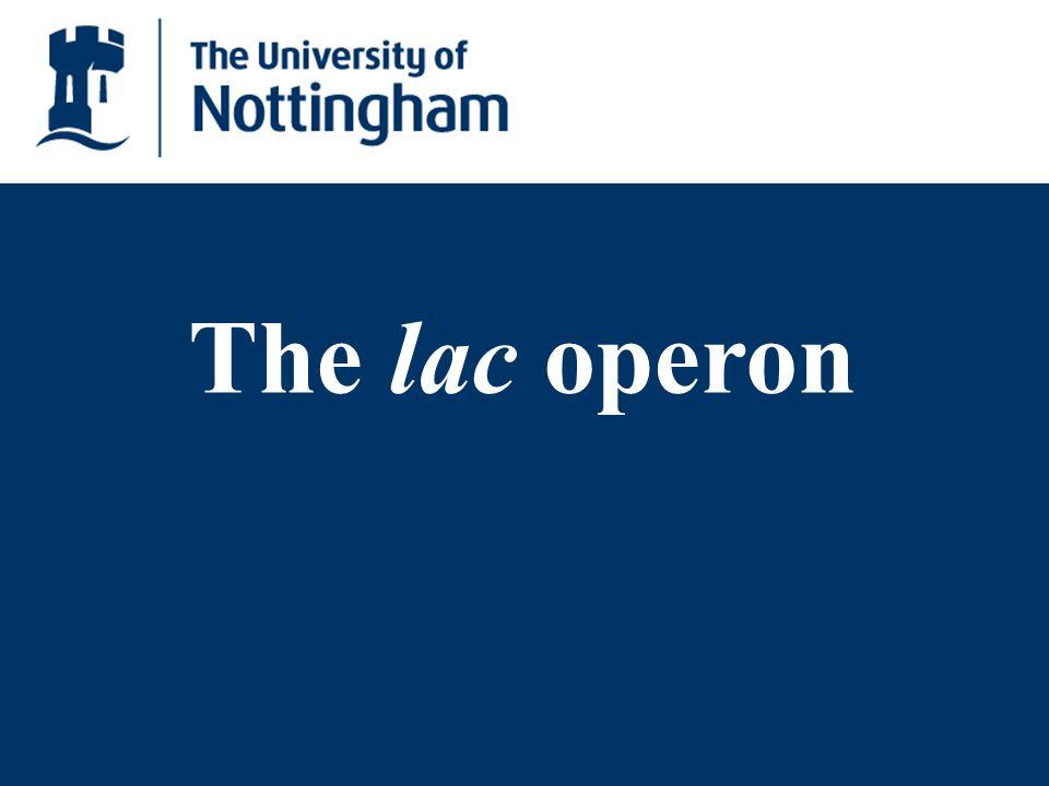 DNA LacI repressor RNA polymerase Active repressor binds to operator Lactose absent: operon switched off The lac operon mRNA P lacI P lacO lacZ lacY lacA