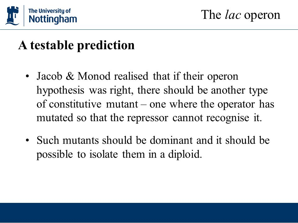 Jacob & Monod realised that if their operon hypothesis was right, there should be another type of constitutive mutant – one where the operator has mut