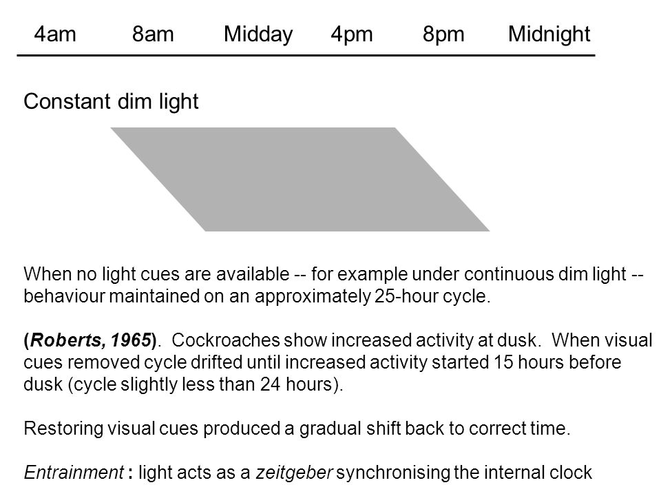 When no light cues are available -- for example under continuous dim light -- behaviour maintained on an approximately 25-hour cycle. (Roberts, 1965).