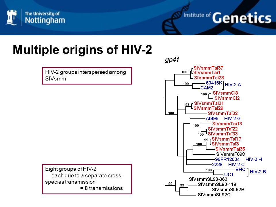 Multiple origins of HIV-2 Eight groups of HIV-2 - each due to a separate cross- species transmission = 8 transmissions HIV-2 groups interspersed among SIVsmm