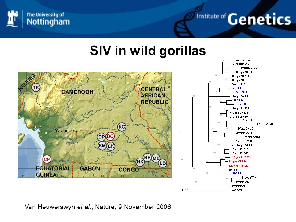 SIV in wild gorillas Van Heuwerswyn et al., Nature, 9 November 2006
