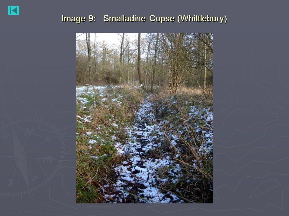 Image 9: Smalladine Copse (Whittlebury)