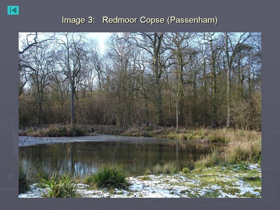 Image 3: Redmoor Copse (Passenham)