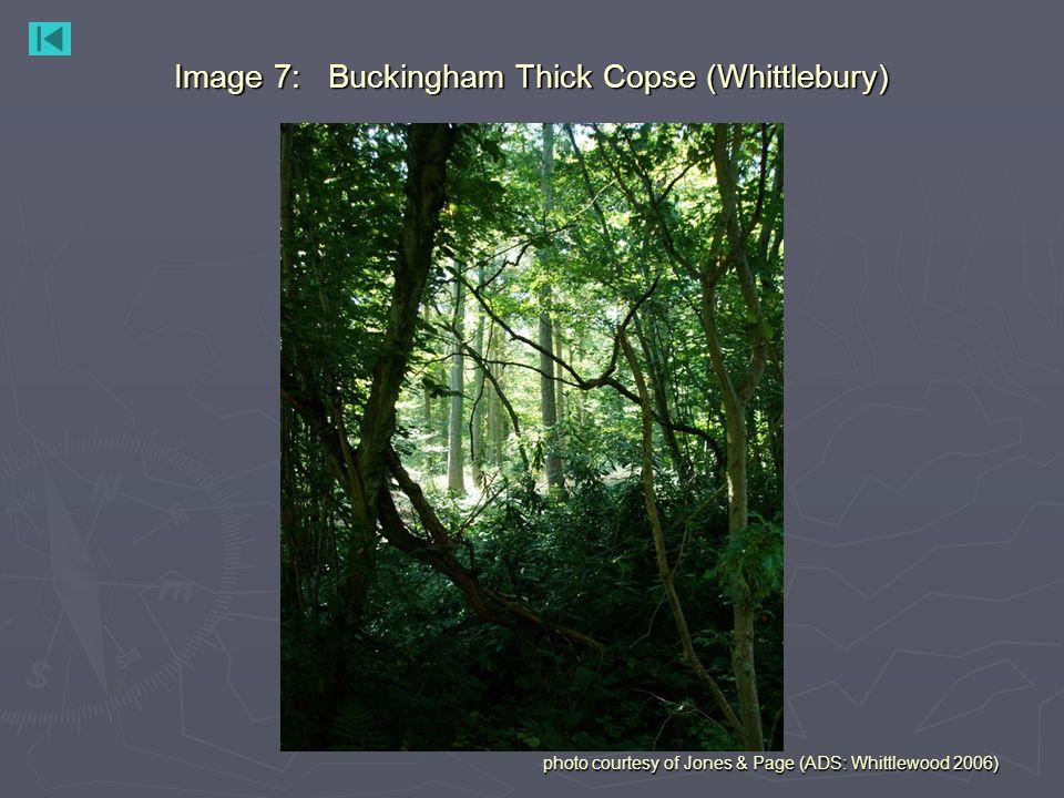 Image 7: Buckingham Thick Copse (Whittlebury) photo courtesy of Jones & Page (ADS: Whittlewood 2006)