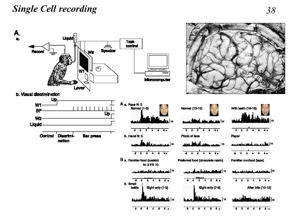 Single Cell recording 38