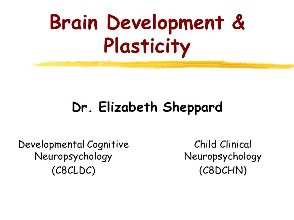 Learning objectives * Consider the role of brain development in the study of childhood cognitive disorders * General principles of brain development * Influences on brain development * Prenatal brain development 1.Structural features 2.Cellular basis (proliferation, migration, differentiation) 3.Disruptions to prenatal development * Postnatal brain development 1.Dendritic aborisation 2.Synaptogenesis 3.Myelination * Specialisation or functional plasticity?