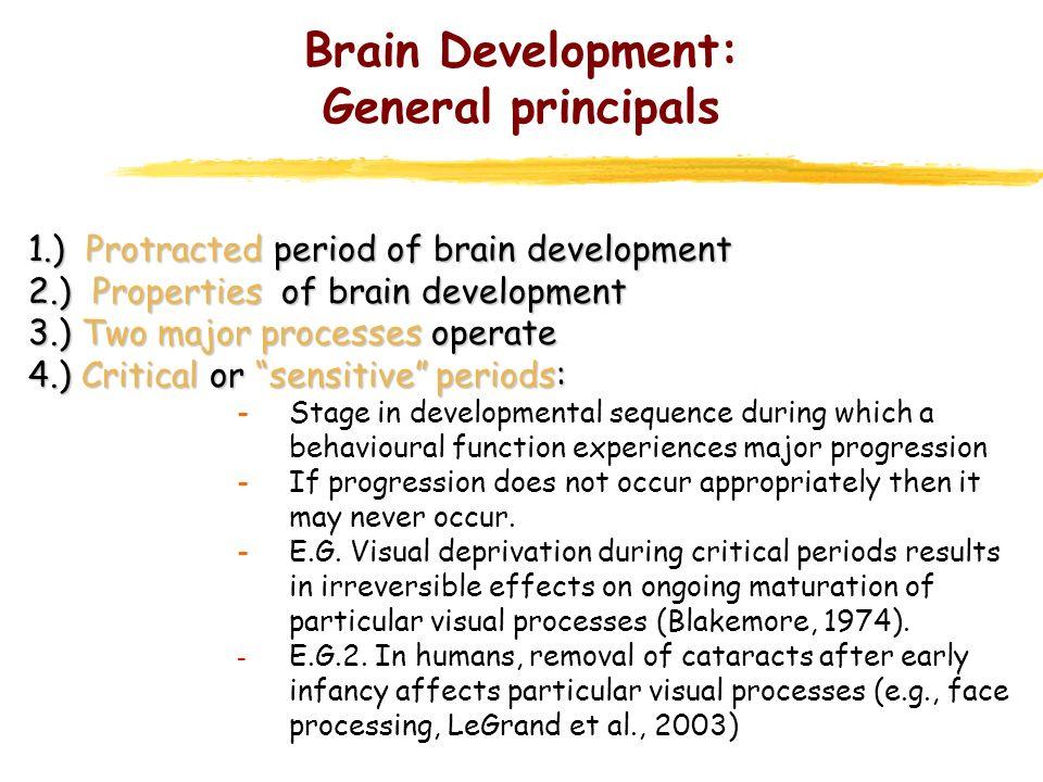 Brain Development: Influences * Various influences can impact on brain development.
