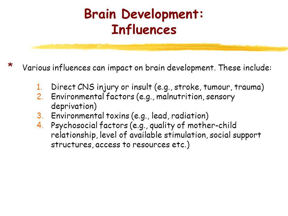 Brain Development: Influences * Impact may not be static.