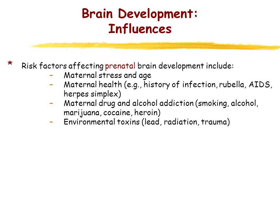 Brain Development: Influences * Risk factors affecting prenatal brain development include: –Maternal stress and age –Maternal health (e.g., history of