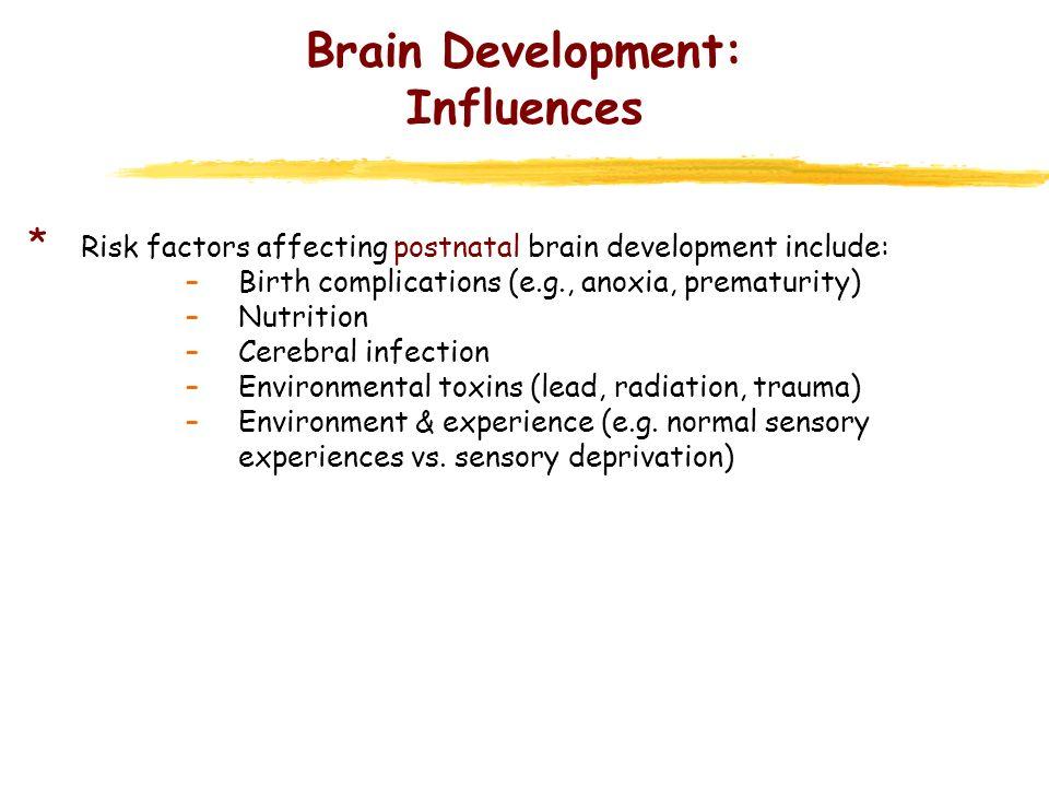 Brain Development: Influences * Risk factors affecting postnatal brain development include: –Birth complications (e.g., anoxia, prematurity) –Nutritio