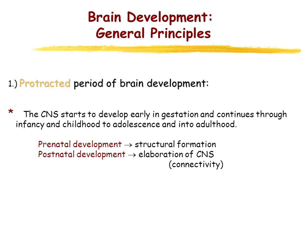 Brain Development: General Principles Protractedperiod of brain development: 1.) Protracted period of brain development: * The CNS starts to develop e