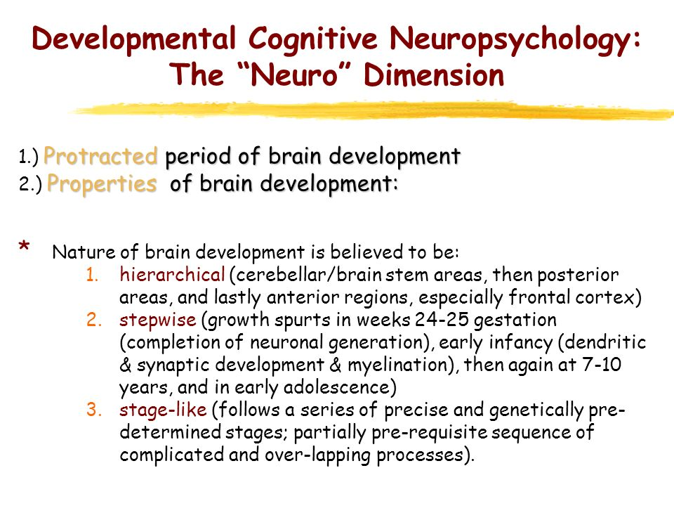 Brain Development: General principals 1.) Protracted period of brain development 2.) Properties of brain development 3.) Two major processes operate: 1.Process of addition -ongoing accumulation or growth -E.G.1.