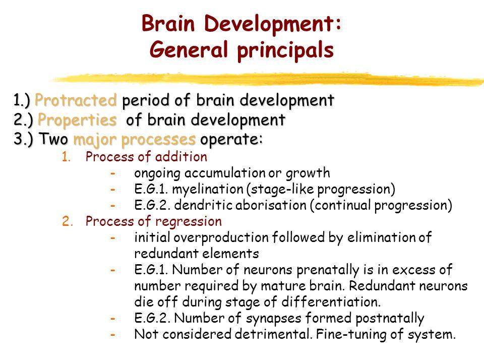 Brain Development: General principals 1.) Protracted period of brain development 2.) Properties of brain development 3.) Two major processes operate:
