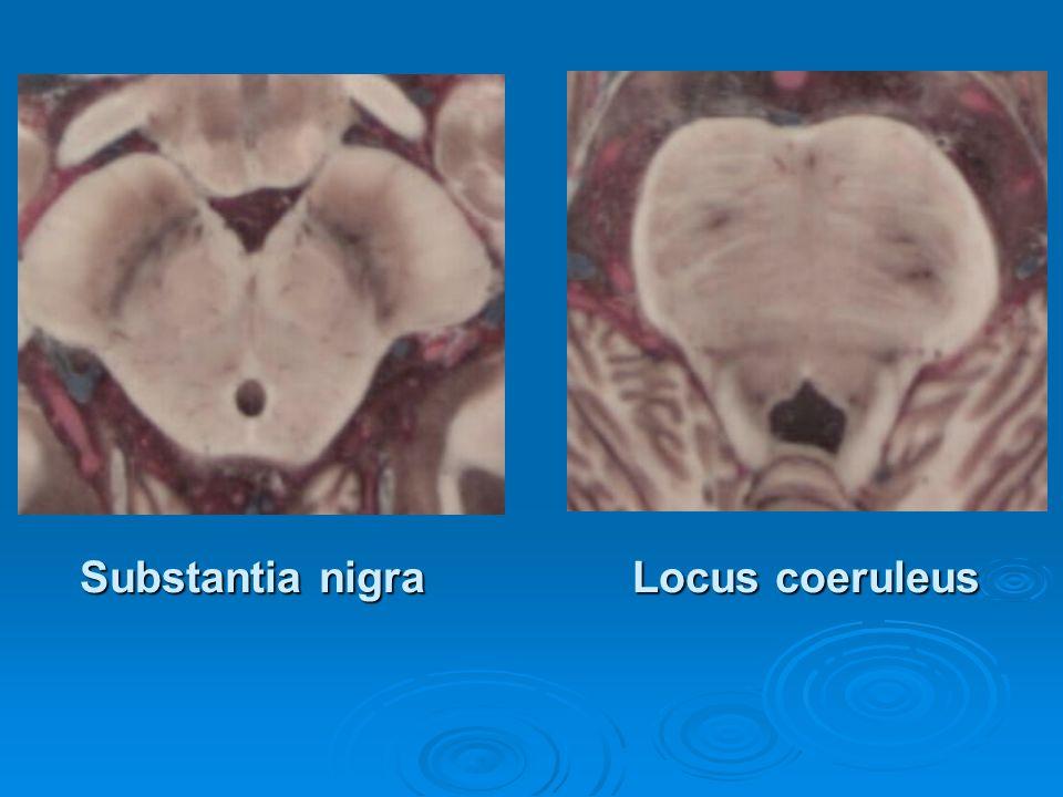 Locus coeruleus Substantia nigra