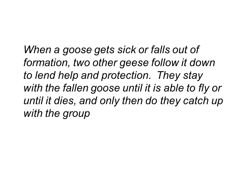 When a goose gets sick or falls out of formation, two other geese follow it down to lend help and protection.
