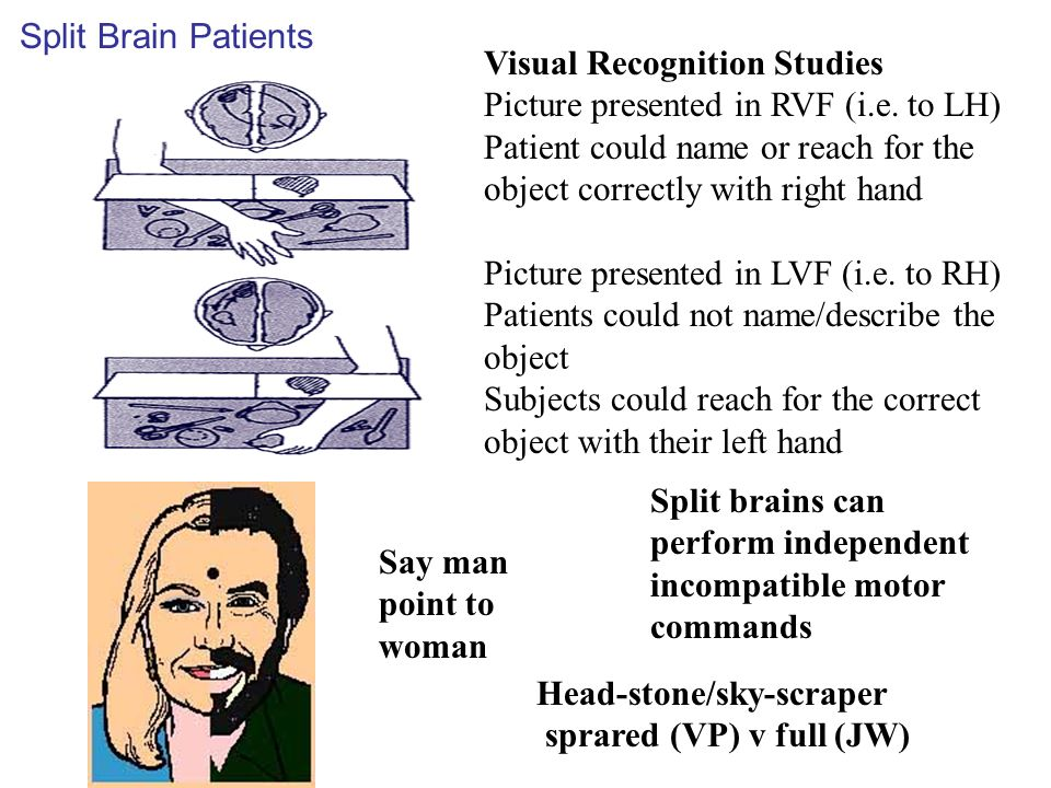Say man point to woman Visual Recognition Studies Picture presented in RVF (i.e.