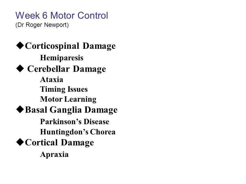 Week 6 Motor Control (Dr Roger Newport) uCorticospinal Damage Hemiparesis u Cerebellar Damage Ataxia Timing Issues Motor Learning uBasal Ganglia Damag