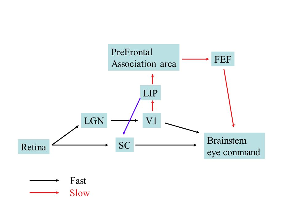 ++++ Posner cueing task validinvalid delay Right parietal patients slower at invalid trials when R box cued.