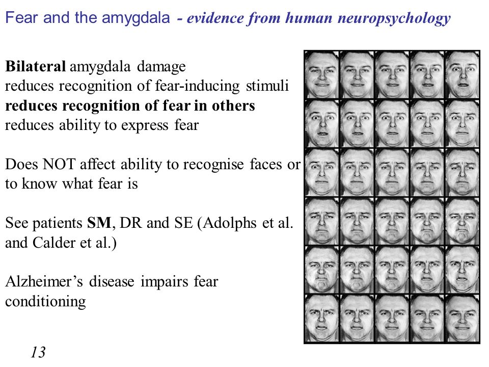 Bilateral amygdala damage reduces recognition of fear-inducing stimuli reduces recognition of fear in others reduces ability to express fear Does NOT