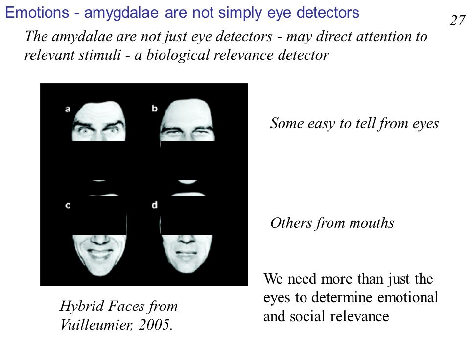 Hybrid Faces from Vuilleumier, 2005. We need more than just the eyes to determine emotional and social relevance 27 Some easy to tell from eyes Others