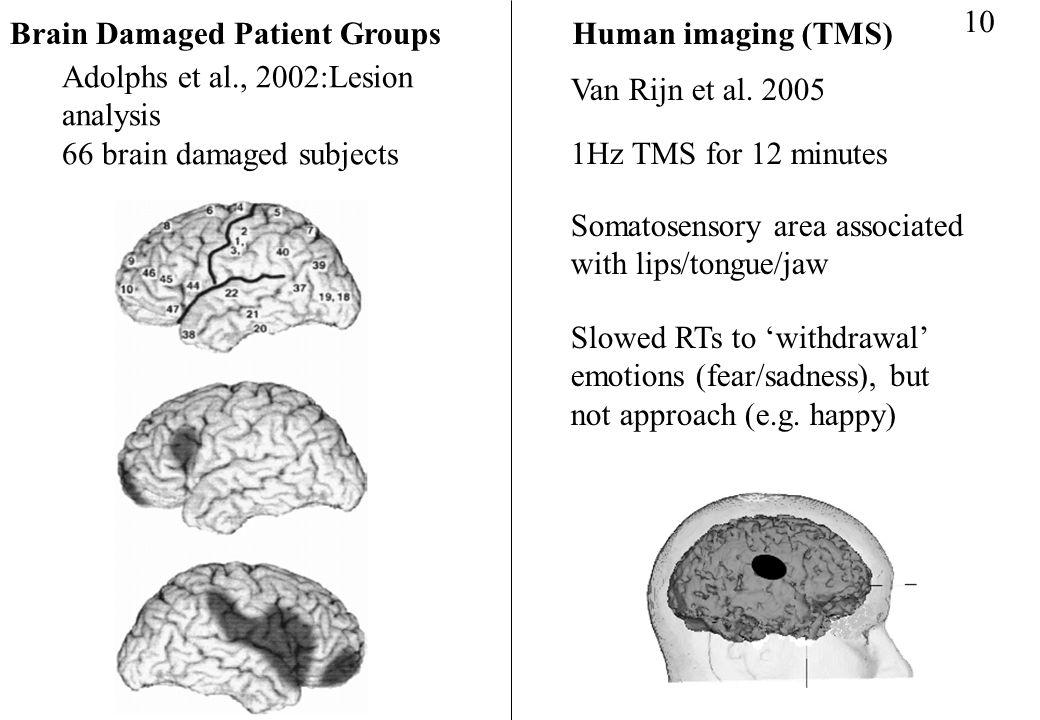 Adolphs et al., 2002:Lesion analysis 66 brain damaged subjects Brain Damaged Patient GroupsHuman imaging (TMS) 10 Van Rijn et al. 2005 1Hz TMS for 12