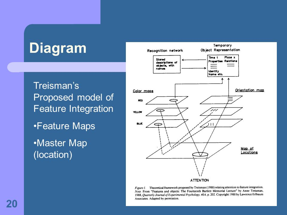 20 Diagram Treismans Proposed model of Feature Integration Feature Maps Master Map (location)