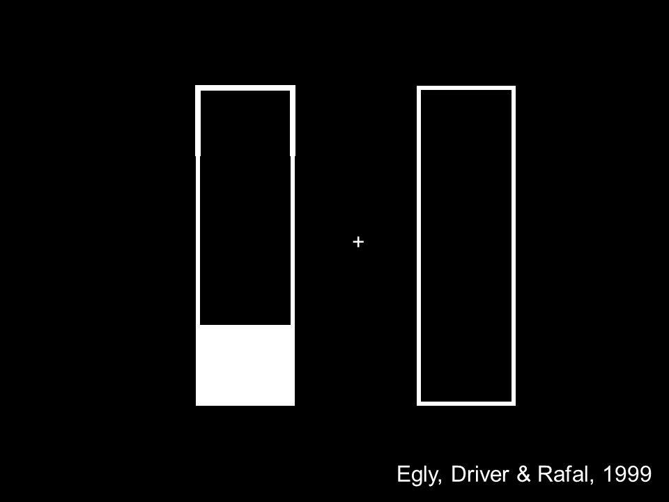 + Egly, Driver & Rafal, 1999