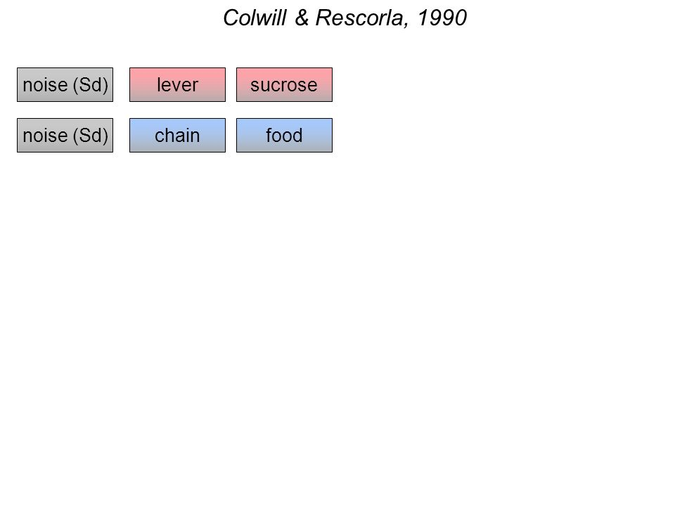 Colwill & Rescorla, 1990 noise (Sd)lever chain sucrose foodnoise (Sd)
