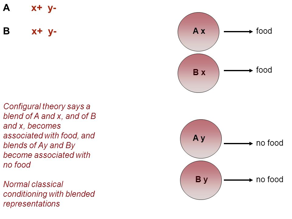 A x+ y- B x+ y- food Configural theory says a blend of A and x, and of B and x, becomes associated with food, and blends of Ay and By become associated with no food Normal classical conditioning with blended representations no food A x B x B y food no food A y