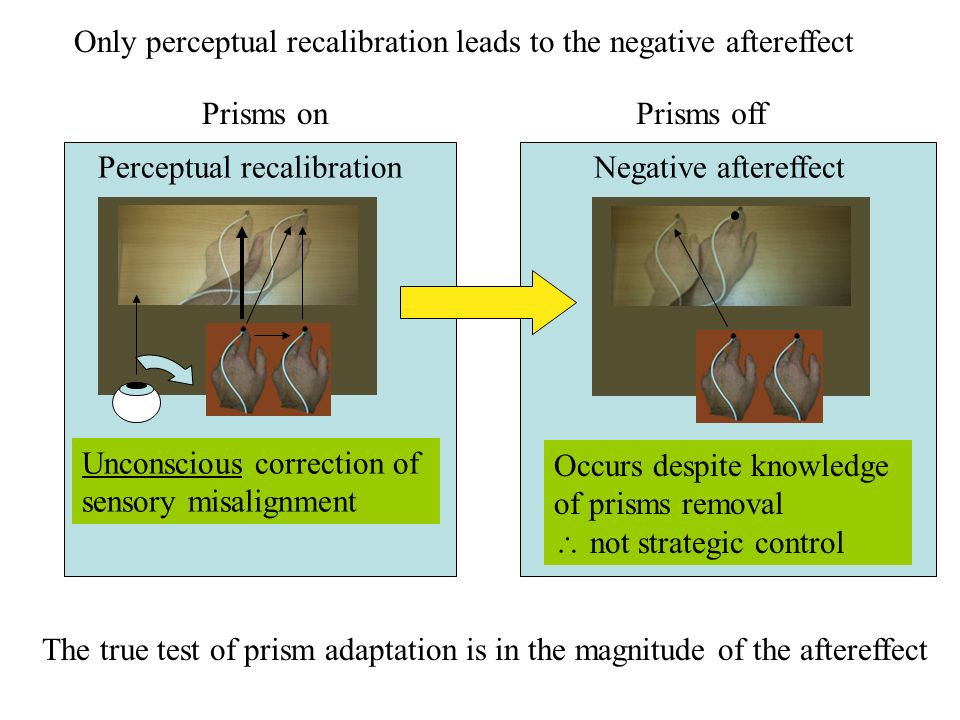 Perceptual recalibration Unconscious correction of sensory misalignment Negative aftereffect Only perceptual recalibration leads to the negative after