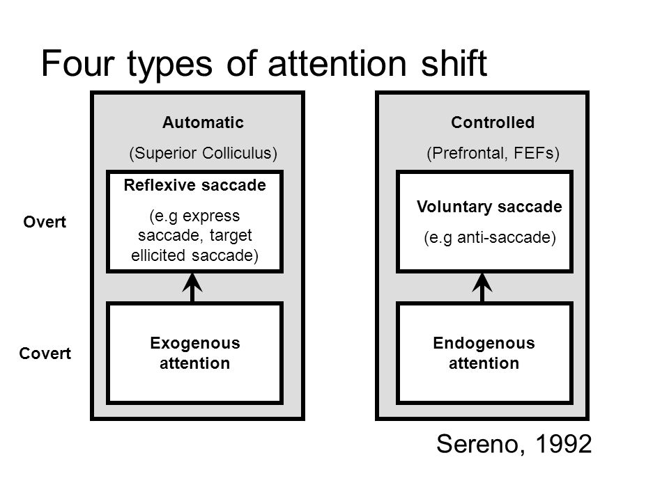 Four types of attention shift Automatic (Superior Colliculus) Controlled (Prefrontal, FEFs) Overt Covert Reflexive saccade (e.g express saccade, target ellicited saccade) Voluntary saccade (e.g anti-saccade) Exogenous attention Endogenous attention Sereno, 1992