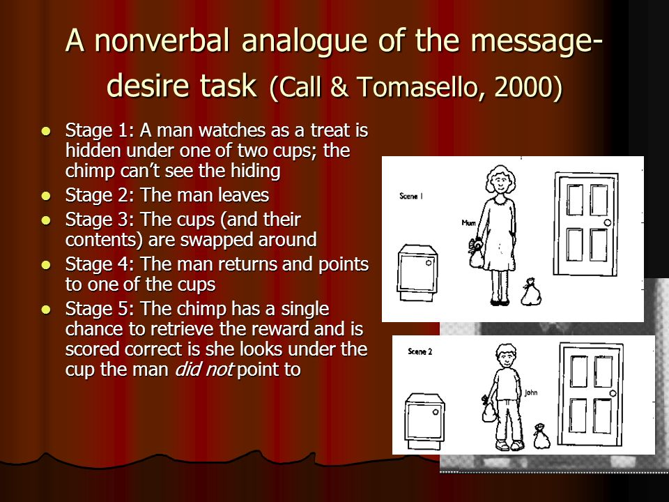 A nonverbal analogue of the message- desire task (Call & Tomasello, 2000) Stage 1: A man watches as a treat is hidden under one of two cups; the chimp