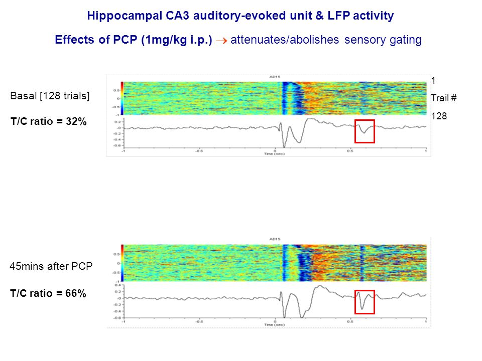 Hippocampal CA3 auditory-evoked unit & LFP activity Effects of PCP (1mg/kg i.p.) attenuates/abolishes sensory gating Basal [128 trials] T/C ratio = 32