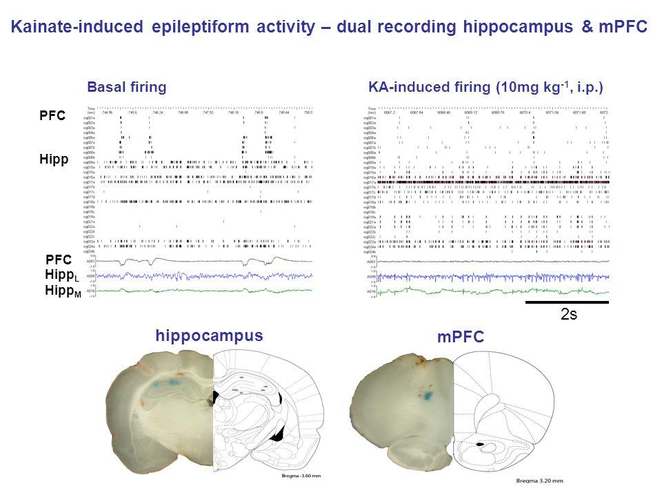hippocampus mPFC PFC Hipp PFC Hipp L Hipp M Basal firingKA-induced firing (10mg kg -1, i.p.) 2s Kainate-induced epileptiform activity – dual recording
