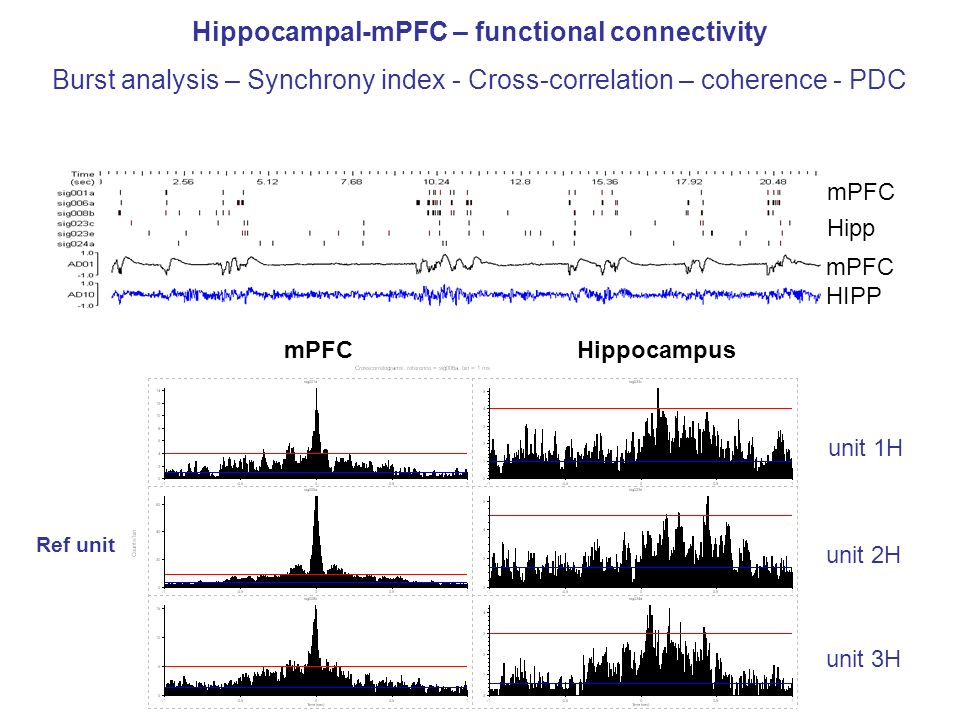 mPFC Hipp mPFC HIPP Hippocampal-mPFC – functional connectivity Burst analysis – Synchrony index - Cross-correlation – coherence - PDC Ref unit mPFCHip